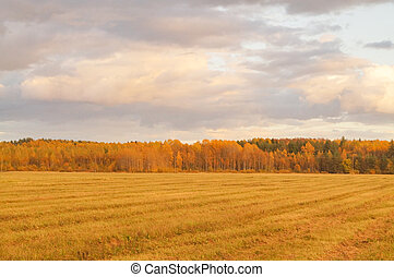 Green field with colorful trees on the horizon