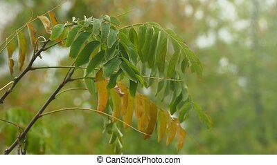 tree branch with green and yellow leaves on a green...