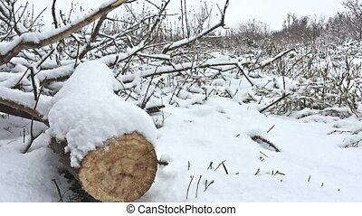 cut down tree branch in snowing winter forest swamp dry grass nature