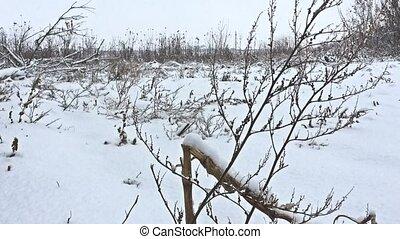 frozen grass winter snows beautiful field nature - frozen...