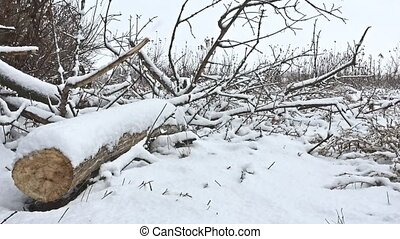 cut down tree winter branch in snowing forest swamp dry grass nature