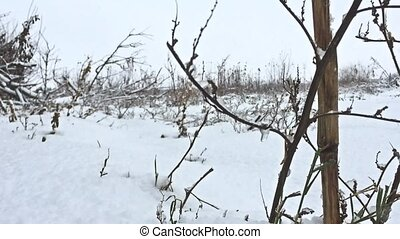 frozen grass snows beautiful winter field nature - frozen...