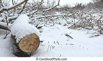 cut winter down tree branch in snowing forest swamp dry grass nature