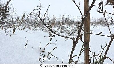 frozen grass snows beautiful field winter nature - frozen...