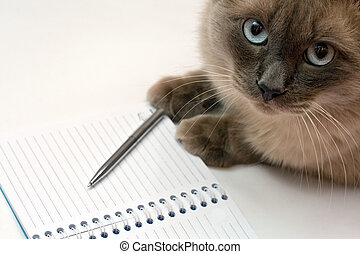 Cat, pen and blank open notepad - Funny business concept -...