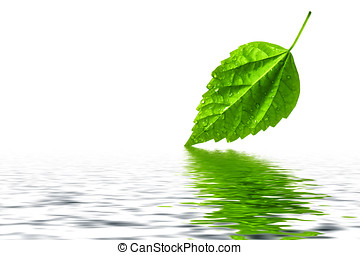 Green leaf reflecting in nice and clear water