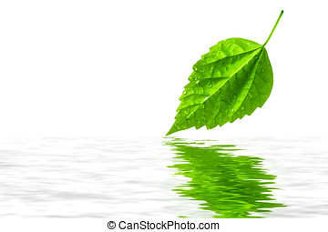 Green leaf reflecting in water - Green leaf reflecting in...