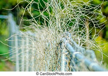 dry plant vines destroying chainlink fence
