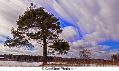 Pine against the sky. Blurry. Time Lapse
