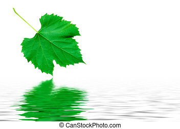 Green grape leaf reflecting in nice pure water