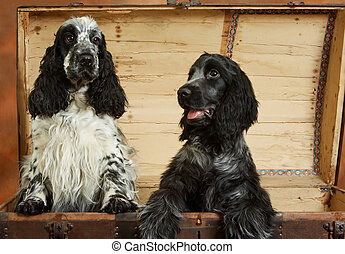 Cockers in a chest - Two cocker spaniels, mother and four...