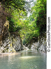 River Canyon Hosta. Sochi, Russia