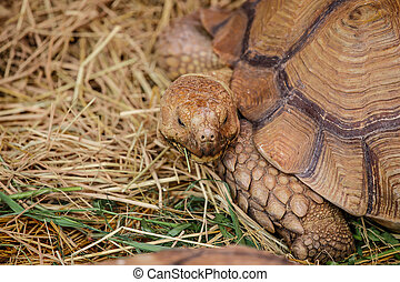 giant turtles close up