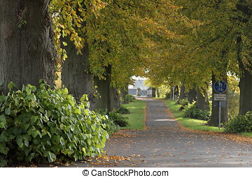 The Linden Tree Alley near Herleshausen in Germany