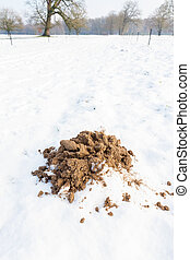 Sandy molehill in winter snow - Brown sandy molehill in...