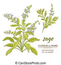 sage vector illustration - sage plant vector illustration on...