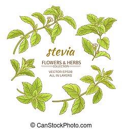 stevia vector set - stevia leaves vector set on white...
