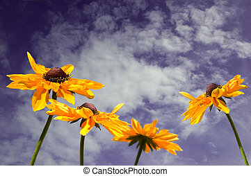 Pretty yellow flowers against a blue sky