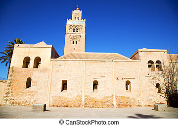 history maroc palm and the blue sky - in maroc africa...