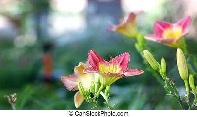 sprinkler in garden pour flower