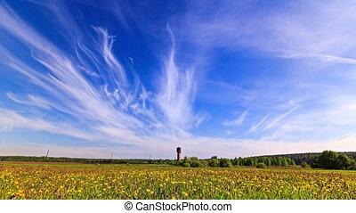 Dandelion field. Time Lapse. 4K