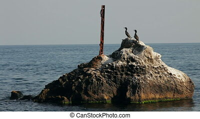 Sunken ruins - Several birds are sitting on a piece of the...