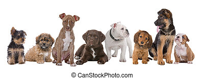 large group of puppies on a white backgroundfrom left to...