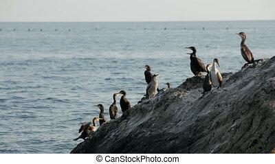 A flock of ducks near the sea
