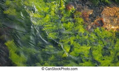 Beautiful seaweed