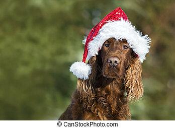 Funny Christmas dog