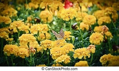 Butterfly on flower - Butterfly collecting nectar on...