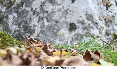 Autumn background, moss and stone - Autumn background - moss...