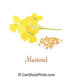 Mustard flower and seeds. Kitchen hand-drawn herbs and...