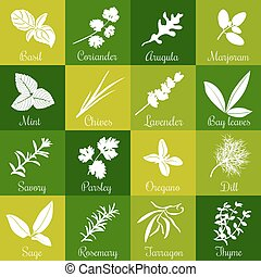 Herbs hand drawn vector big icon squared set - Herbs hand...