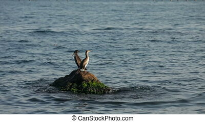 Ducks - Two ducks are sitting on a rock in the middle of the...