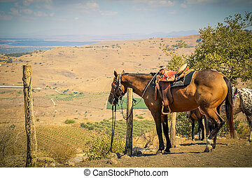 Horse tie to a pole in a ranch at rural area.
