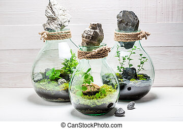 Wonderful live plants in a jar with self ecosystem