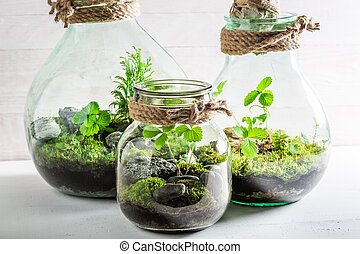 Small jar with live forest, save the earth concept