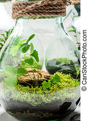 Beautiful jar with live forest, save the earth idea
