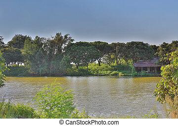 fish pond at HA PAK LAI - te fish pond at HA PAK LAI  2016