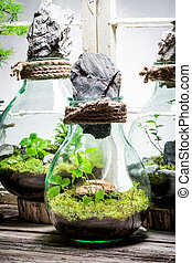 Wonderful rain forest in a jar as new life concept
