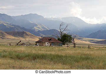 old shack with dry tree - old shack at the foot of the...