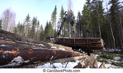 View of logger loads harvested trunks in forest -...