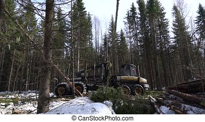 View of timber loader rides through woods - Woodworking....