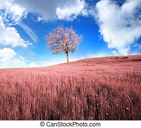 Infrared meadow in and spring tree. Composition of nature.