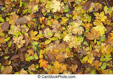 Autumn leaf texture. Nature composition