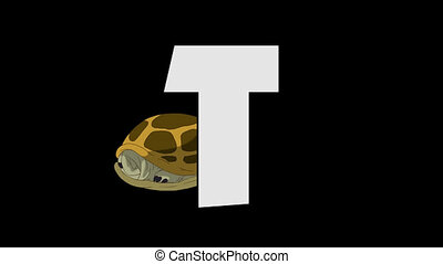 Letter T and Turtle (background) - Animated animal English...