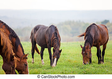 Horses grazing in a meadow near a forest - Horses grazing in...
