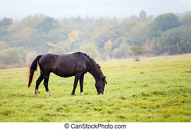 Horse grazing in a meadow in autumn