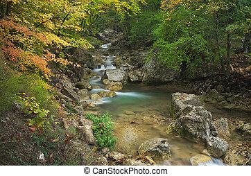 Autumn rill flow. Nature composition.